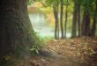Les arbres sont les organismes vivants les plus anciens sur Terre